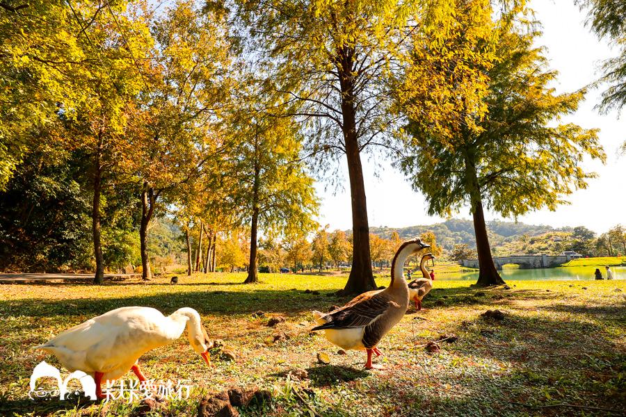 【宜蘭景點】金黃色浪漫5個宜蘭落羽松秘境|秋冬限定的美景變色的季節月份時間 - kafkalin.com