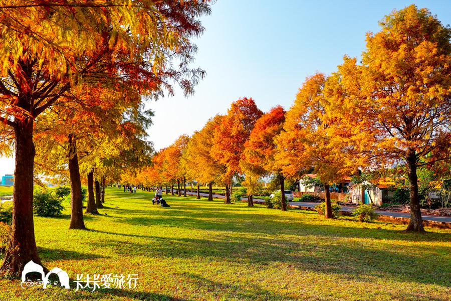 【宜蘭景點】三星安農溪畔落羽松|秋天壯麗落羽松秘境