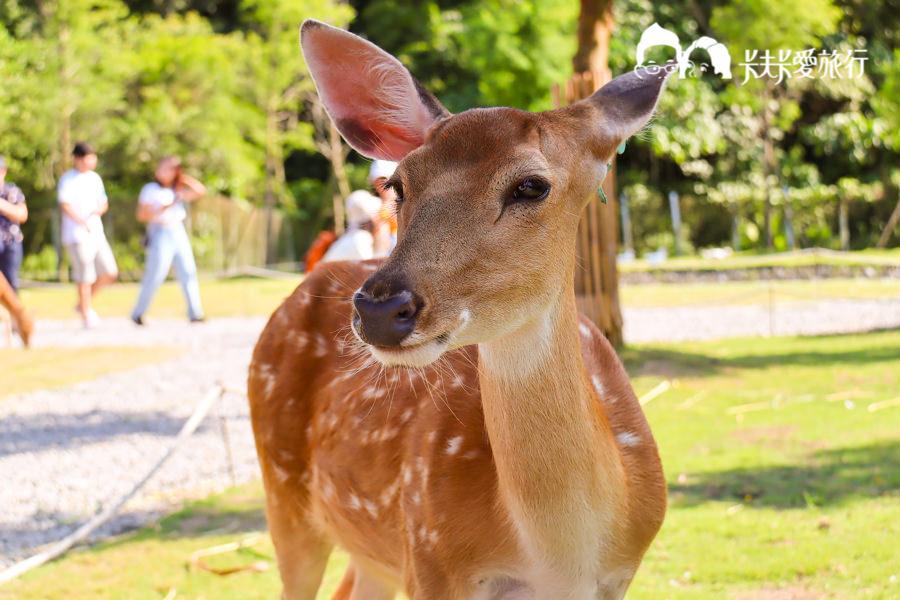 【宜蘭新景點】斑比山丘|台版奈良與小鹿互動免排隊法公開!美美子下午茶咖啡