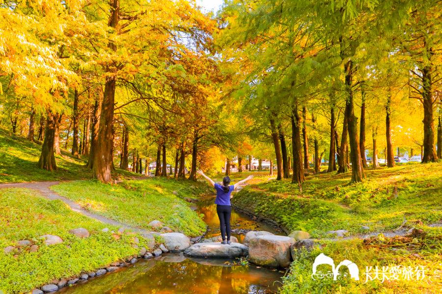 【宜蘭景點】金黃色浪漫5個宜蘭落羽松秘境|秋冬限定的美景變色的季節月份時間