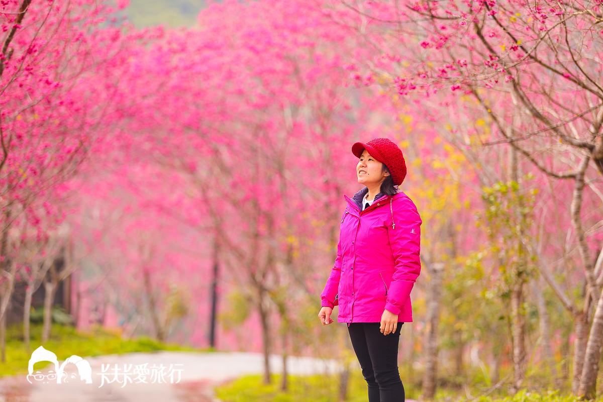 宜蘭櫻花盛開了!推薦必去10個宜蘭賞櫻景點秘境|櫻花花期情報八重櫻吉野櫻