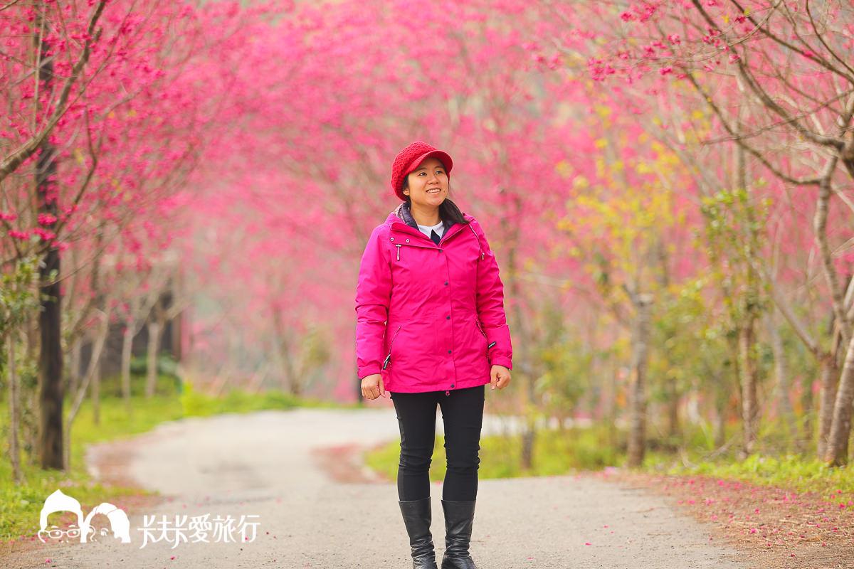 【宜蘭賞櫻花景點】粉紅浪漫台七線櫻花林秘境|媲美日本賞櫻|棲蘭達漾咖啡後
