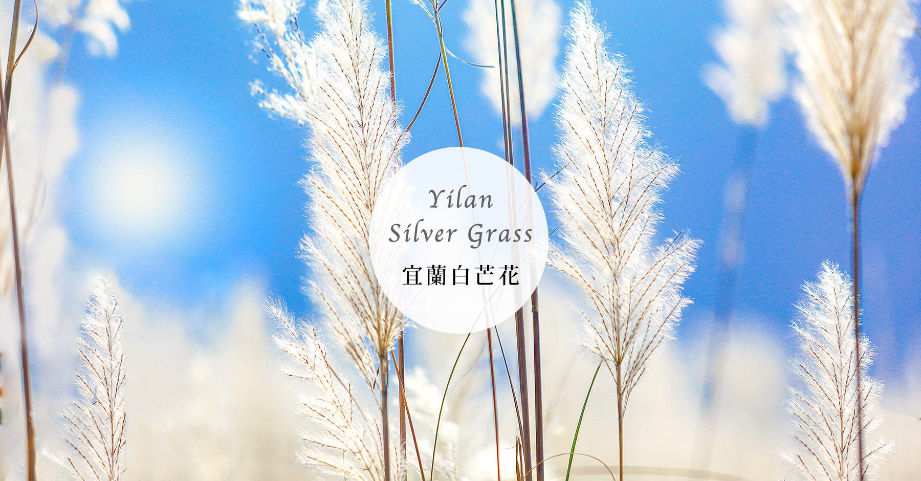 【宜蘭景點】銀白色夢幻下雪了!5個白芒花、甜根子草秘境公開秋冬限定菅芒花海