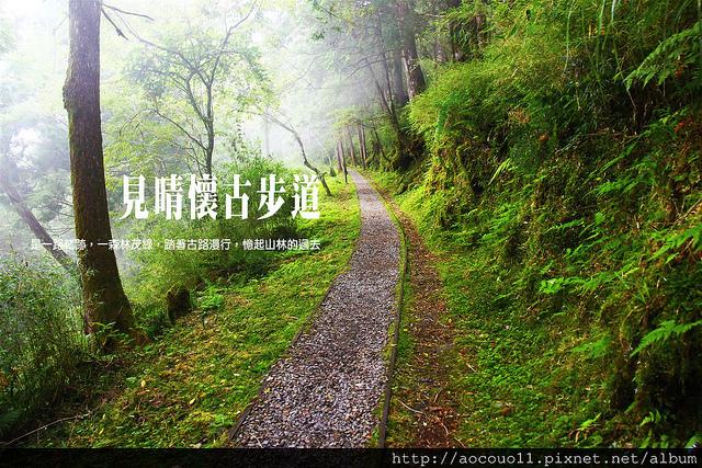 【宜蘭大同鄉】太平山見晴懷古步道 森林鐵路與檜木林的印記古道